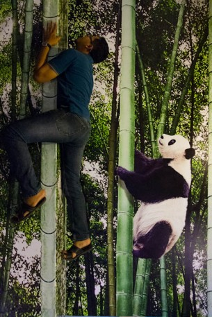 Balapan sama panda