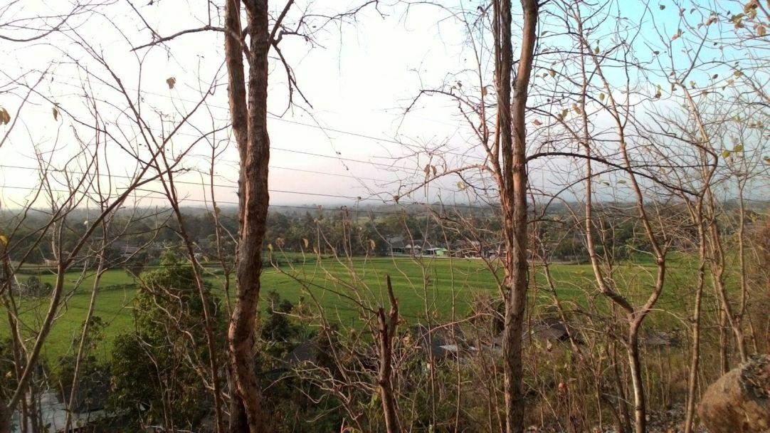 Pemandangan desa di balik ranting-ranting kering